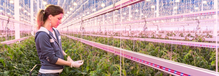 philips   header-greenhouses-JAMI-960x335px