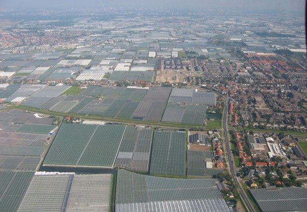 philips horti -----greenhouses-in-westland-the-netherlands--11649